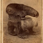 grizzly_bear_chairs_2